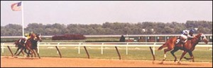 July 15, 1972 Aqueduct Race Course
