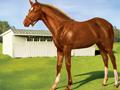 meadow_foal
