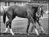 Secretariat's Pedigree