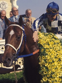 Preakness Garland Photo